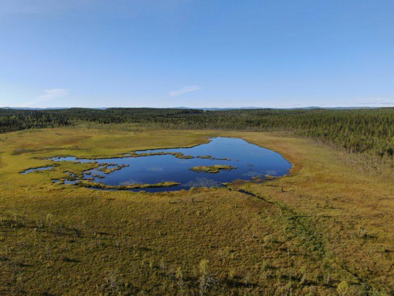 Våtmark – fåglarnas och älgarnas rike